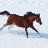 konie_fot-marcyniuk_0526_