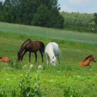 konie_fot-marcyniuk_0584_