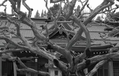 Wystawa 'Niezmiennie Japonia' w CH Osowa